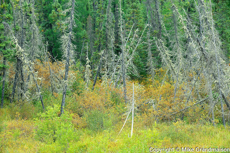 Wetland in boreal forest<br /> Gillam Road<br /> Manitoba<br /> Canada
