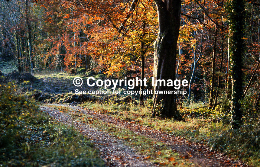 Autumn at Castlecaldwell Forest, Belleek, Co Fermanagh, N Ireland, UK, 1978110031b..Copyright Image from Victor Patterson, 54 Dorchester Park, Belfast, UK, BT9 6RJ..Tel: +44 28 9066 1296.Mob: +44 7802 353836.Voicemail +44 20 8816 7153.Skype: victorpattersonbelfast.Email: victorpatterson@me.com.Email: victorpatterson@ireland.com (back-up)..IMPORTANT: If you wish to use this image or any other of my images please go to www.victorpatterson.com and click on the Terms & Conditions. Then contact me by email or phone with the reference number(s) of the image(s) concerned.