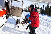 Pilot Bruce Marony loads a dropped dog at Rohn for a trip back to the hub checkpoint of McGrath during the 2010 Iditarod