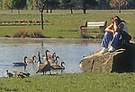 Gentlemen  having a discussion with a Canada Goose family.  Dannialson Park, Middlesex County, New Jersey