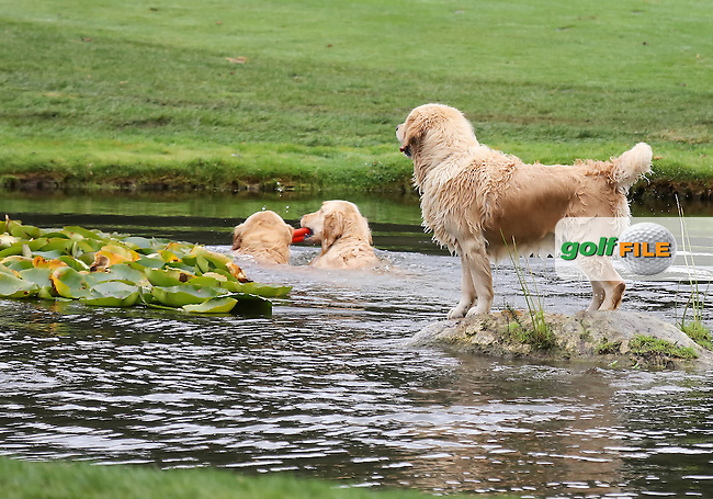www.golffile.ie