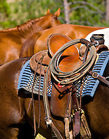 Western cowpuncher's saddle on brown horse with blue saddle blanket, rope, and 2 horses in background