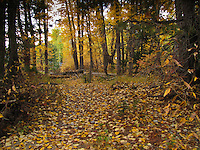 Fall leaves carpet the ground under trees at Cisco Grove Gould Park in California's Sierra Mountains.