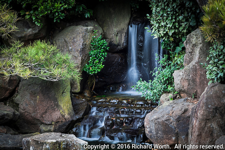 Tucked away in the rocks of a koi pond, a miniature waterfall flows in an urban neighborhood Japanese Garden.