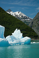 Icebergs float in waters colored aqua by glacial silt-Tracy Arm Fjord, Alaska, USA