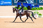 Alex Hua Tian riding Ballytiglea Vivendi. CHN. Eventing Dressage. Day 3. World Equestrian Games. WEG 2018 Tryon. North Carolina. USA. 13/09/2018. ~ MANDATORY Credit Elli Birch/Sportinpictures - NO UNAUTHORISED USE - 07837 394578