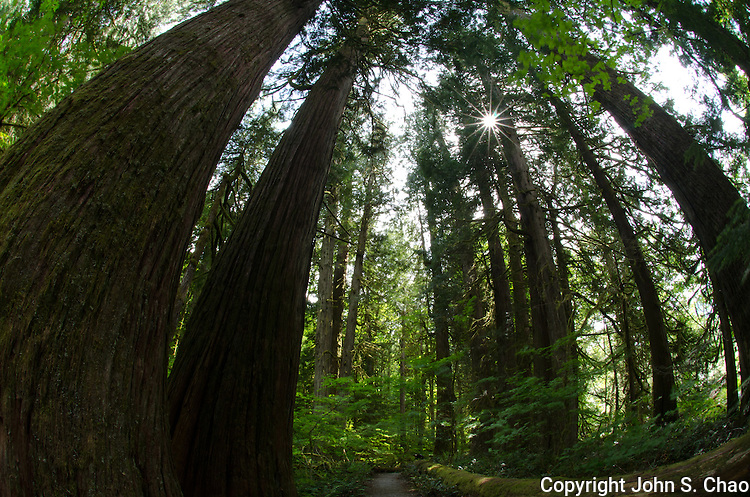 A sunburst above the forested Trail of the Cedars, Newhalem, North Cascades National Park, Washington State
