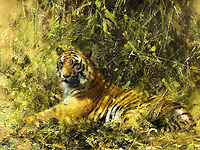 Raffle prize with roaring price tag: Tiger painting by wildlife artist David Shepherd in £15k Sale.