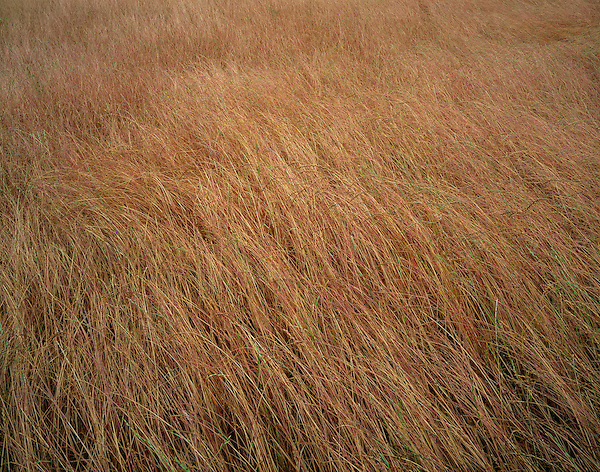 Grasses and prairie on the east slopes of the Cascade Mountains, central Washington, USA .  John offers private photo tours and workshops throughout Colorado. Year-round. .  John offers private photo tours throughout the western USA, especially Colorado. Year-round.