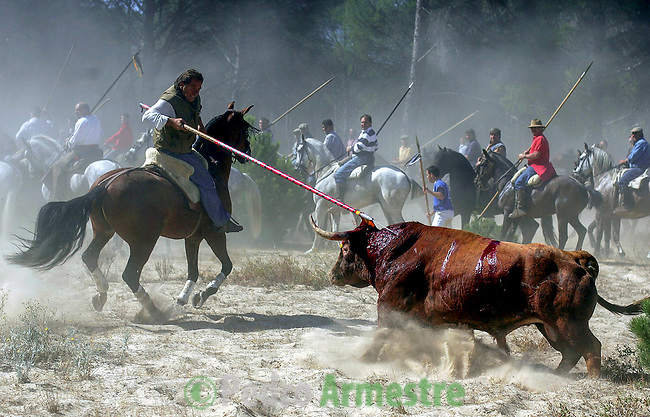 A mounted horseman tries to kill the Bull of the Vega in Tordesillas, near Valladolid, 13 September 2005. The festival is one of the oldest in Spain with roots dating back to the fifteenth century. The bull has to be enticed across the river from the village to the plain 'Vega' before it can be killed to honour the 'Virgen de la Pena'. (c) Pedro ARMESTRE