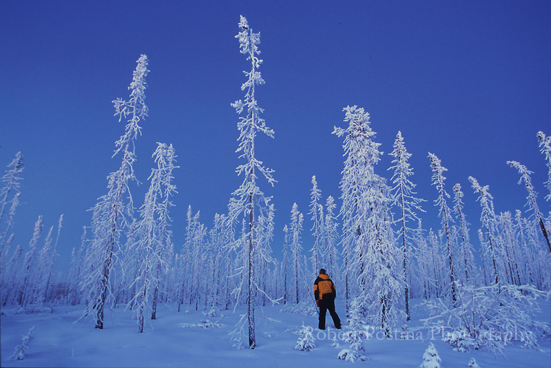 Man standing in an old burn along the Dempster Highway in the winter.