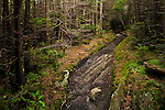 Mount Mitchell / Mountains-to-sea Trail through the summit forest, Mount Mitchell State Park