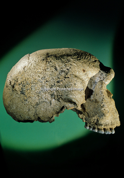 DOH, The First Europeans, 300,000 year old skull, Steinheim, Germany