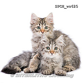 Xavier, ANIMALS, REALISTISCHE TIERE, ANIMALES REALISTICOS, FONDLESS, photos+++++,SPCHWS625,#A#