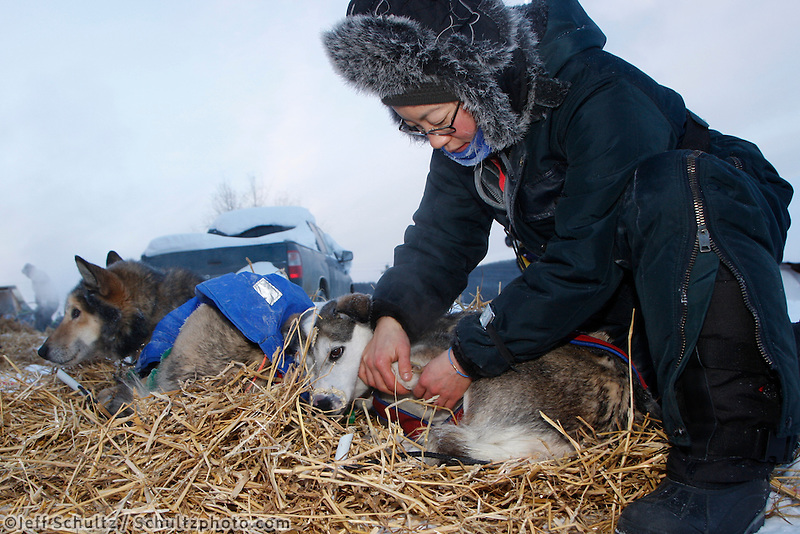 Friday March 12 , 2010   Veterinarian Jennifer Bando examines a Sebastian Schnuelle dog at the village checkpoint  of Ruby