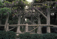 Wisteria climbing vine in May bloom on gorgeous arbor made of large tree trunk supports, with steps stairs. The Huntington, San Marino, CA