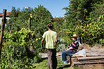 Venezia L'orto sinergico coltivato da Michele Savorgnano. Sono 300 le piante i fiori coltivati in questo spazio. Michele Savorgnano nel suo orto. L'orto si trova all'interno della casa di Riposo delle Zittelle e spesso gli ospiti