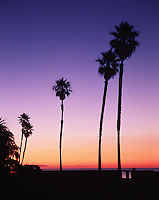 Sunrise over the horizon at Butterfly Beach,accented with palm trees in silhouette. Santa Barbara, California.