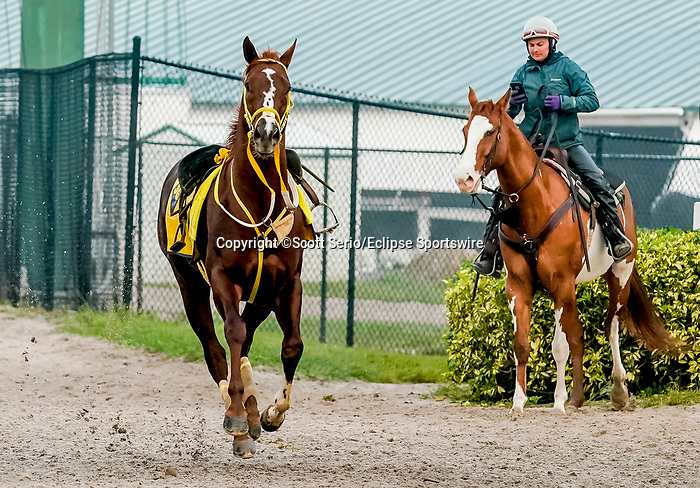 January 23, 2020: A loose horse charges through the backside heading back to its barn as horses prepare for the Pegasus World Cup Invitational at Gulfstream Park Race Track in Hallandale Beach, Florida. Scott Serio/Eclipse Sportswire/CSM