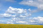 Europa, DEU, Deutschland, Nordrhein Westfalen, NRW, Rheinland, Niederrhein, Opherten, J&uuml;licher B&ouml;rde, Agrarlandschaft, Fr&uuml;hling, Raps, Rapsbl&uuml;te, Himmel, Wolken, Cumuluswolken.  Kategorien und Themen, Landwirtschaft, Landwirtschaftlich, Agrar, Agrarwirtschaft, Erzeugung, Landwirtschaftliche Produkte, Natur, Naturfoto, Naturfotos, Naturfotografie, Naturphoto, Naturphotographie, Landschaft, Landschaften, Landschaftsfoto, Landschaftsfotografie, Landschaftsphoto, Landschaftsphotographie<br /> <br /> [Fuer die Nutzung gelten die jeweils gueltigen Allgemeinen Liefer-und Geschaeftsbedingungen. Nutzung nur gegen Verwendungsmeldung und Nachweis. Download der AGB unter http://www.image-box.com oder werden auf Anfrage zugesendet. Freigabe ist vorher erforderlich. Jede Nutzung des Fotos ist honorarpflichtig gemaess derzeit gueltiger MFM Liste - Kontakt, Uwe Schmid-Fotografie, Duisburg, Tel. (+49).2065.677997, archiv@image-box.com, www.image-box.com]