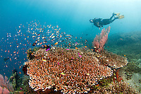 female diver and corals at the japanese wreck in Amed - Bali. The Japanese wreck at at Banyuning near Amed in Bali is the other shipwreck in north-east Bali and although it plays second fiddle to the Liberty wreck at nearby Tulamben, is an excellent dive and well worth making the fairly short journey to Amed if you are staying in the Tulamben area. The wreck is located in shallow water, just off the beach in Lipah Bay near the small village of Banyuning, which places it close to Gili Selang where the forces of the Indonesian currents are strongest. Very little is known about the wreck and how it ended up sank at Banyuning – or even if it really was a Japanese ship...who knows???