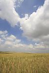 Israel, Shephelah, fields by road 35