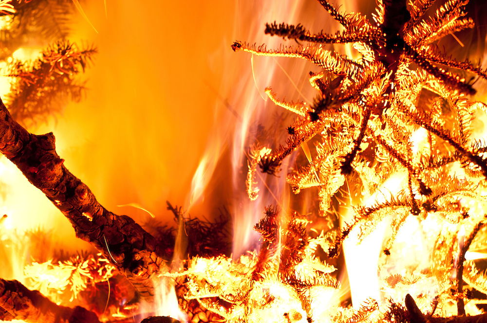 Burning Christmas Tree.Burning Christmas Tree Golden Gardens Seattle Brendan