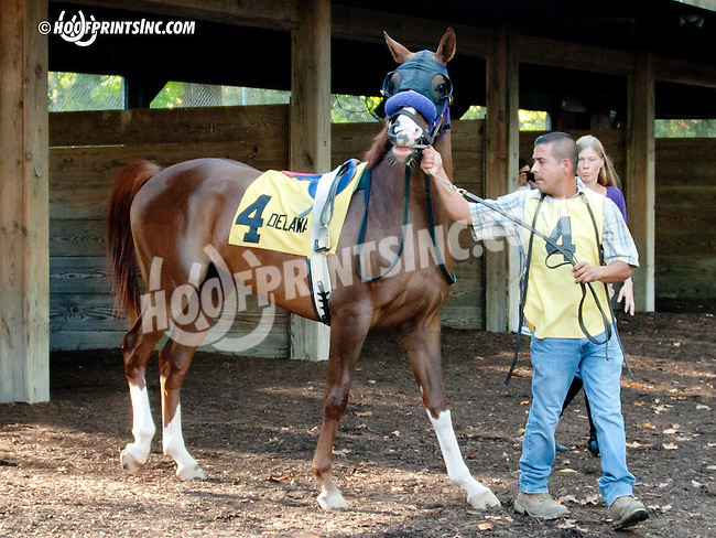 Tu For the Money before The Delaware Park Arabian Juvenile Championship (gr 3) at Delaware Park on 9/28/13