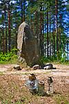 Leśno, 2011-07-09. Kamienne kręgi na ścieżce lichenologiczno-kulturowej w Leśnie