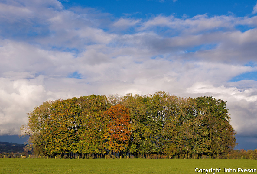 Autumn trees near Clitheroe, Lancashire.