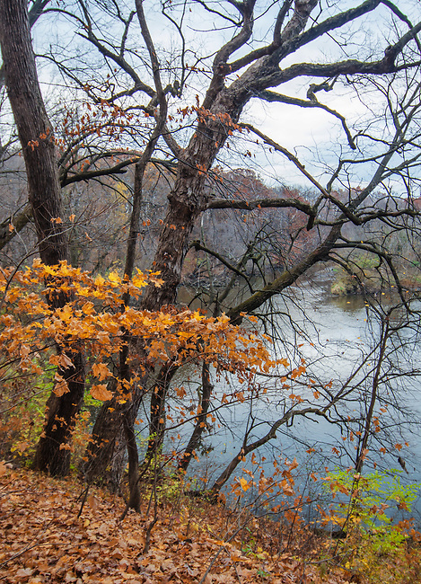 The DuPage River flows through a valley it created eons ago, Hammel Woods Forest Preserve, Will County, Illinois