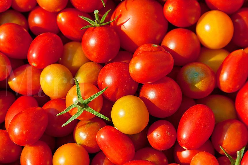 Cherry tomato harvest.