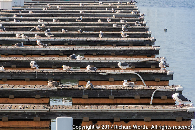 Gulls roost where boats once docked.  Multiple berths stand empty at a marina in transition due to the high cost of dredging.  The San Leandro Marina on San Francisco Bay's eastern shore.