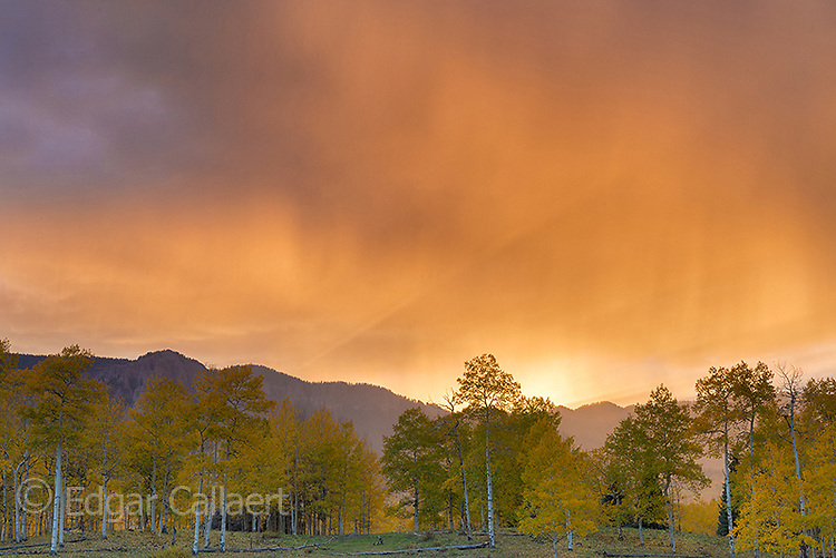 Sunset, Rain, Aspen, Populus Tremula, Cimmaron Valley, Uncompahgre National Forest, Colorado