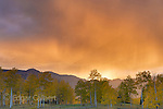Sunset, Rain, Aspen, Populus Tremula, Cimmaron Valley, Uncompahgre National Forest, Colorado