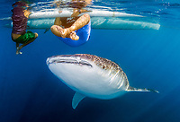 whale shark; Rhincodon typus, with Children; Gorontalo; Sulawesi; Gulf of Tomini; Indo-Pacific; Indonesia