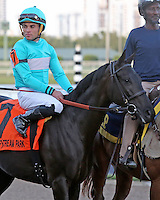 HALLANDALE BEACH, FL - FEBRUARY 04:  Rymska (FR) #7, with jockey Joel Rosario on board, in the post parade of the Sweetest Chant Stakes G2 at Gulfstream Park on February 04, 2017 in Hallandale Beach, Florida. (Photo by Liz Lamont/Eclipse Sportswire/Getty Images)