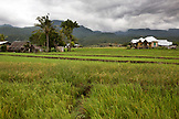 INDONESIA, Flores, on the right the Waerebo Hotel sits in the middle of the rice fields in Dintor village