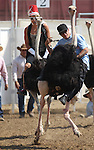 Amanda Mattioli and Brade Emmans ride in an ostrich race at the International Camel Races in Virginia City, Nev., on Friday, Sept. 9, 2011. .Photo by Cathleen Allison