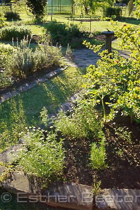 A medicinal display herb garden. Ourimbah, central coast, NSW