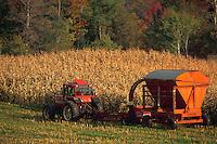 Harvesting corn. Vermont.