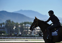 Scenes from morning workouts for the upcoming Breeders Cup at Santa Anita Park on October 29, 2012.