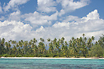 Aroa Point, Moorea, French Polynesia; palm trees and white sand beach, viewed from the shallow coral reef off Aroa Point , Copyright © Matthew Meier, matthewmeierphoto.com All Rights Reserved