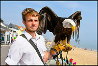 Where Seagulls Dare! - Resort recruits Eagle helpers.