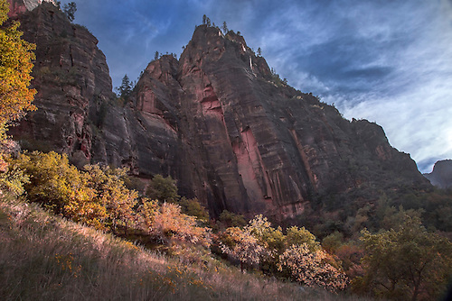 Fall has arrived at Zion Canyon at Zion National Park, Utah