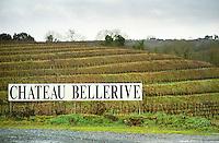 Terraced vineyard. In the Chaume appellation, Chateau Bellerive. Coteaux du Layon, Anjou, Loire, France