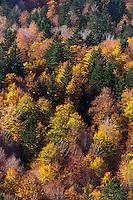 Europe, France, Aquitaine, Pyrénées-Atlantiques, Béarn, Vallée d'Aspe, Forêt à l'automne Col du Somport // Europe, France, Aquitaine, Pyrenees Atlantiques, Bearn, Aspe Valley, Forest in autumn Somport
