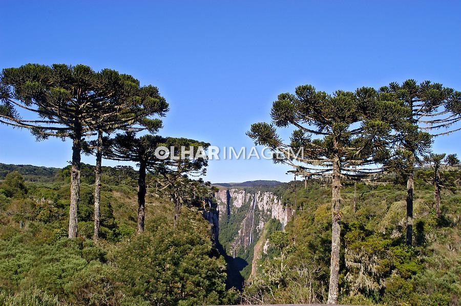 Canyon Itaimbézinho no Parque Nacional de Aparados da Serra. Cambará do Sul. Rio Grande do Sul. Foto de Thais Falcão.