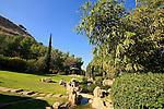 G-031 Japanese garden in Kibbutz Heftziba