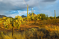 """SAGUARO DESERT""<br />